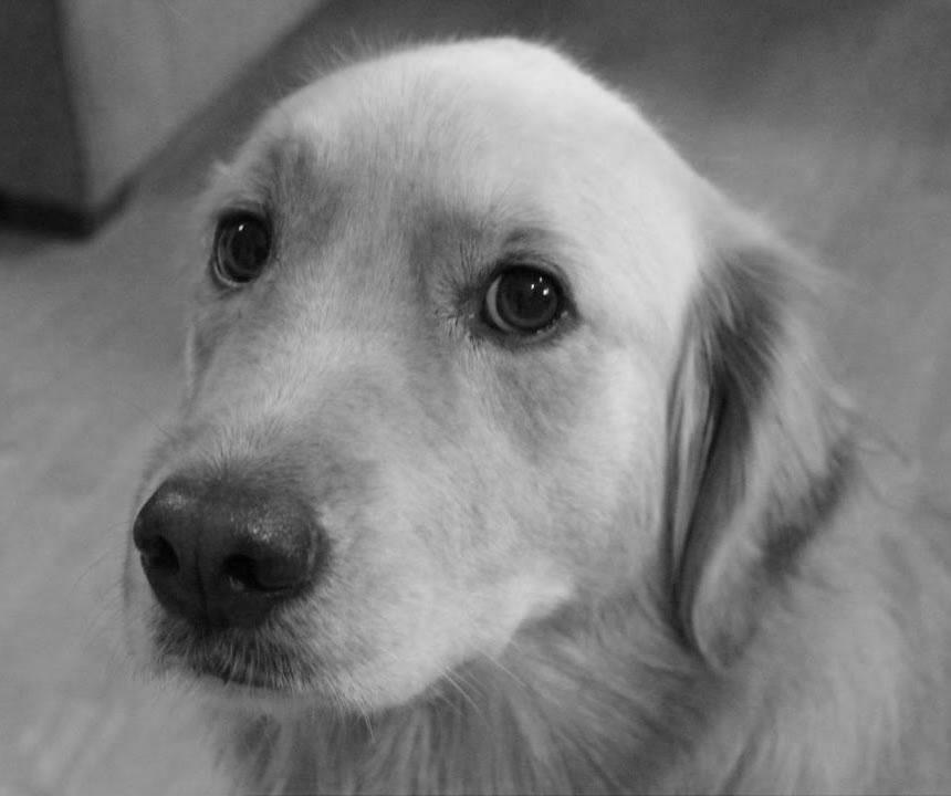 expreience-dog-hotelcityroma